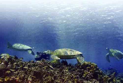 Derawan Island, The Hidden Paradise In East Kalimantan 02 - Finansialku
