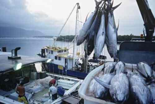 Duh, China Larang Impor Seafood RI Karena Mengandung Corona
