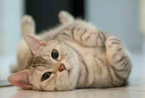 Suka Anabul? Gabung Aja ke Komunitas Pecinta Kucing Ini!