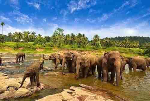 Way Kambas National Park, Home for Endangered Species of Sumatra
