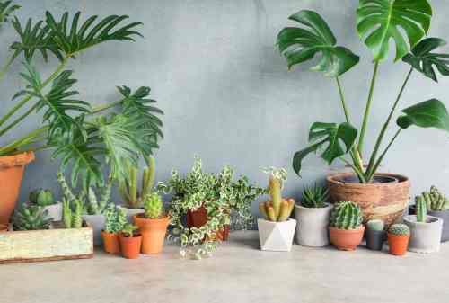 9 Tanaman Hias yang Bisa Tumbuh di Cahaya Redup