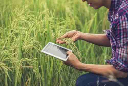 Masa Depan Cerah! Ini Prospek Kerja Jurusan Agroteknologi