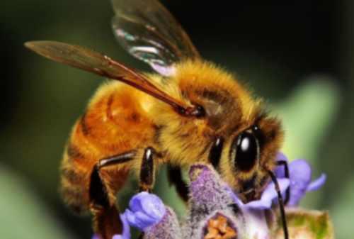 WOW! Ini 5+ Fakta Unik Lebah yang Musti Kamu Tahu