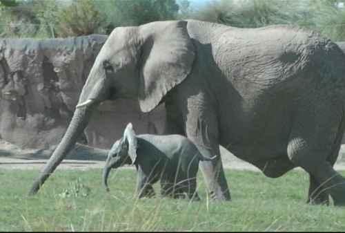 Elephant Parenting, Pola Asuh Seperti Gajah Membesarkan Anaknya